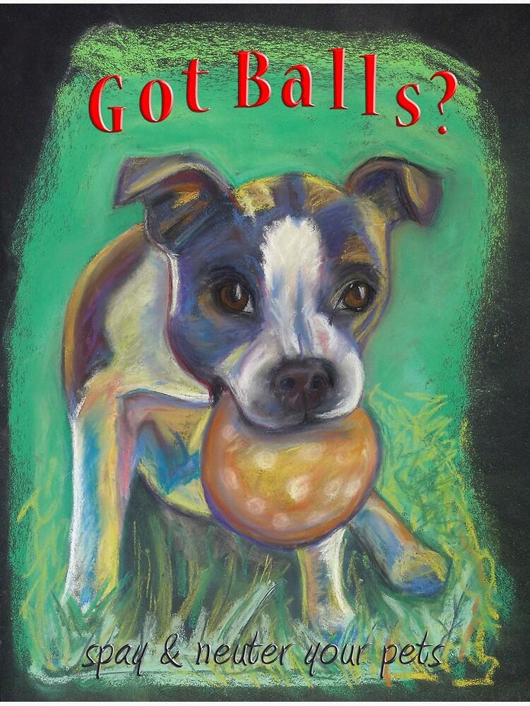 Boston Terrier - Spay/Neuter   Poster