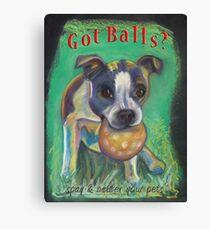 Boston Terrier - Spay/Neuter Canvas Print