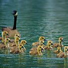 Spring Goslings by Anne McKinnell