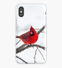 Cardinal On A Branch  iPhone Case/Skin