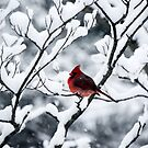 Cardinal In Snow Covered Tree by Mary Carol Story