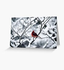 Cardinal In Snow Covered Tree Greeting Card
