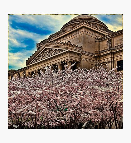 Brooklyn Museum Photographic Print