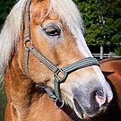 Beautiful Blonde Horse by Elzbieta Fazel