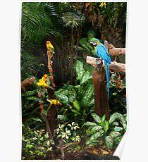 Birds at Jurong Bird Park Singapore Poster