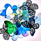 Butterfly Collection 1 by Holly Daniels