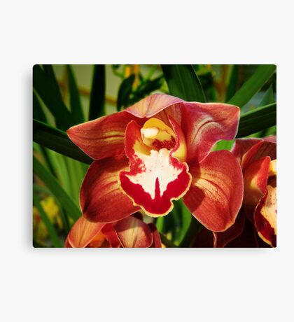Orchid Collection - 19 Canvas Print