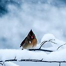 Winter Blues by Mary Carol Story