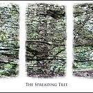 The Spreading Tree by Andy Coleman