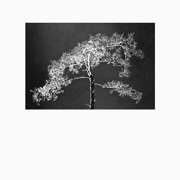 my tree by anathems