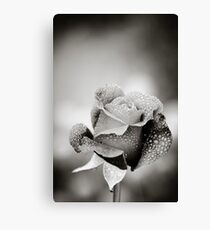Rose and Dew Drops Canvas Print