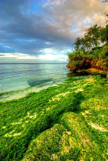 Going Green by Yhun Suarez