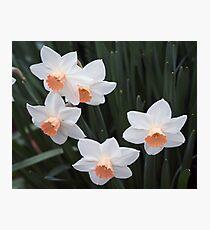 Flowers 1 Photographic Print