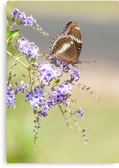 Geisha girl - butterfly feeding. by Jenny Dean