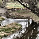 Low Stream by Barb Miller