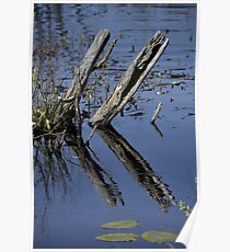 Reflective Pond Poster