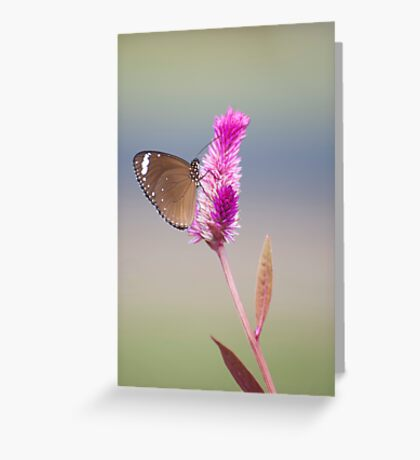 Happy Days - common eggfly butterfly Greeting Card