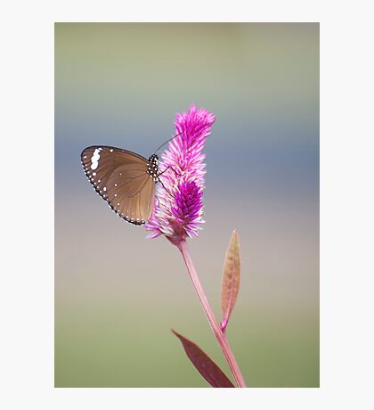 Happy Days - common eggfly butterfly Photographic Print