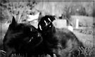 Little Panther by jodi payne