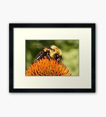 Big Bumble Bee Framed Print