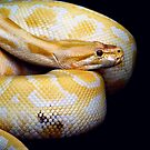 Yellow Python 2 by oddoutlet