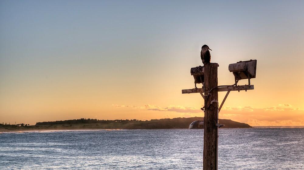Cormorant Dawn by Jason Ruth