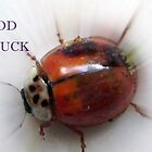 GOOD LUCK by Heidi Mooney-Hill