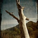 Old Tree by fotocoe