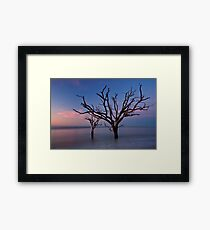 Stranded Trees Framed Print