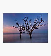 Stranded Trees Photographic Print