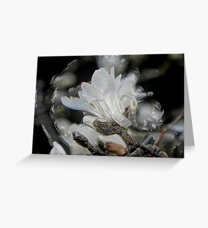 Tree Buds © Greeting Card
