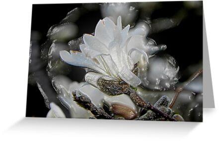 Tree Buds © by Dawn Becker