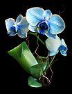 Blue Mystique Orchid by Stephen D. Miller