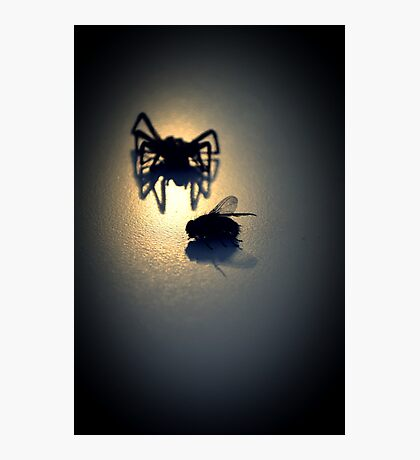 """Will you step into my parlor?"" said the spider to the fly... Photographic Print"
