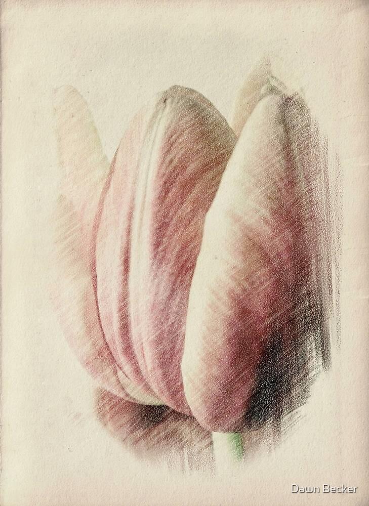 Pastel Tulip © by Dawn Becker