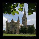 Salisbury Cathedral by John Dalkin