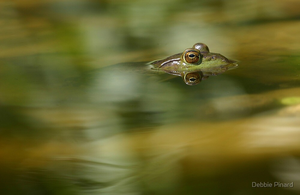 Frog Reflecting, Dunrobin, Ontario by Debbie Pinard