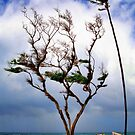 Windswept Beach - Maui by TWindDancer