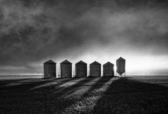 The Tin Men by Steve Silverman