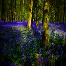 Bluebell Carpet by Lucy Martin