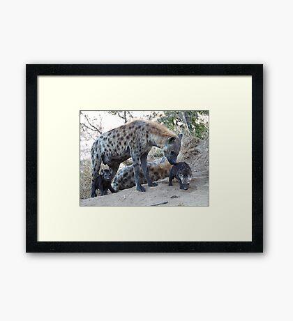 Hyena Family Framed Print