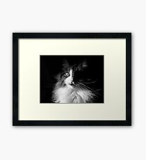 Whiskers ~  Shadows & Light ~ Captivated Cat Framed Print