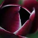 Portrait of a Tulip by Rosy Kueng Photography