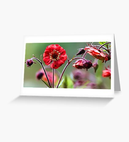 Geum Blossoms - Flame of Passion Greeting Card