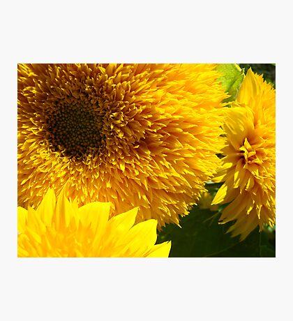 Yellow Bright SunFlower Garden Floral Baslee Troutman Photographic Print