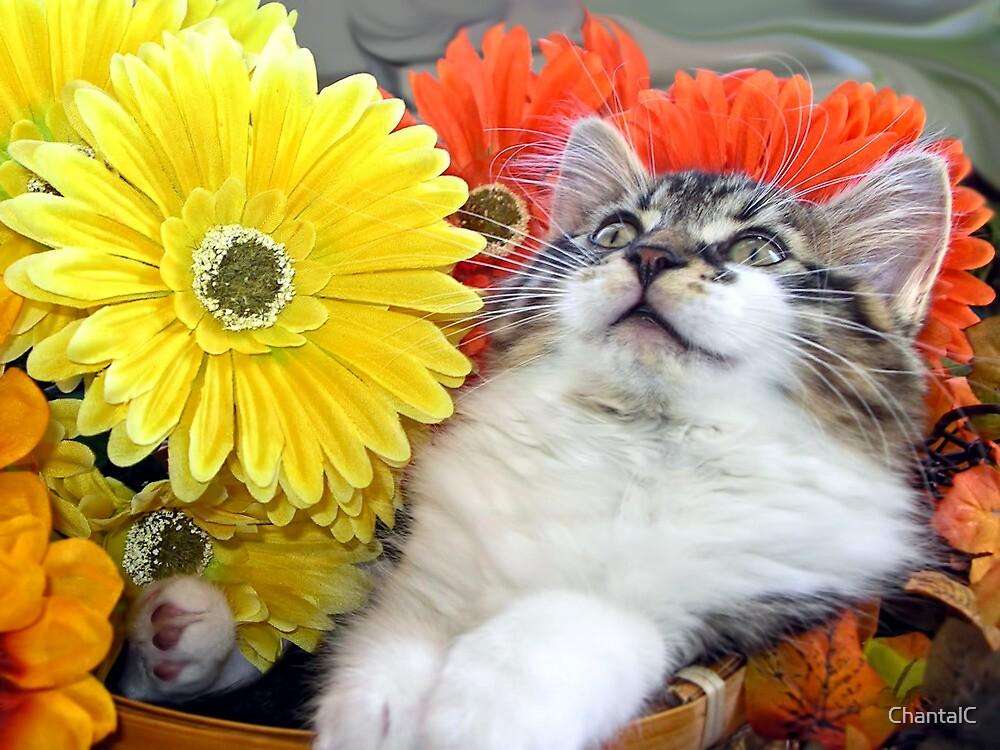 Venus ~ Cute Kitty Cat Kitten in Decorative Fall Flowers by Chantal PhotoPix