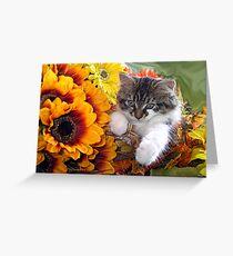 Venus ~ Cute Kitty Cat Kitten in Fall Sunflowers and Gerberas Greeting Card