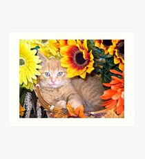 Di Milo ~ Sunflower Basket ~ Cute Kitty Cat Kitten Art Print
