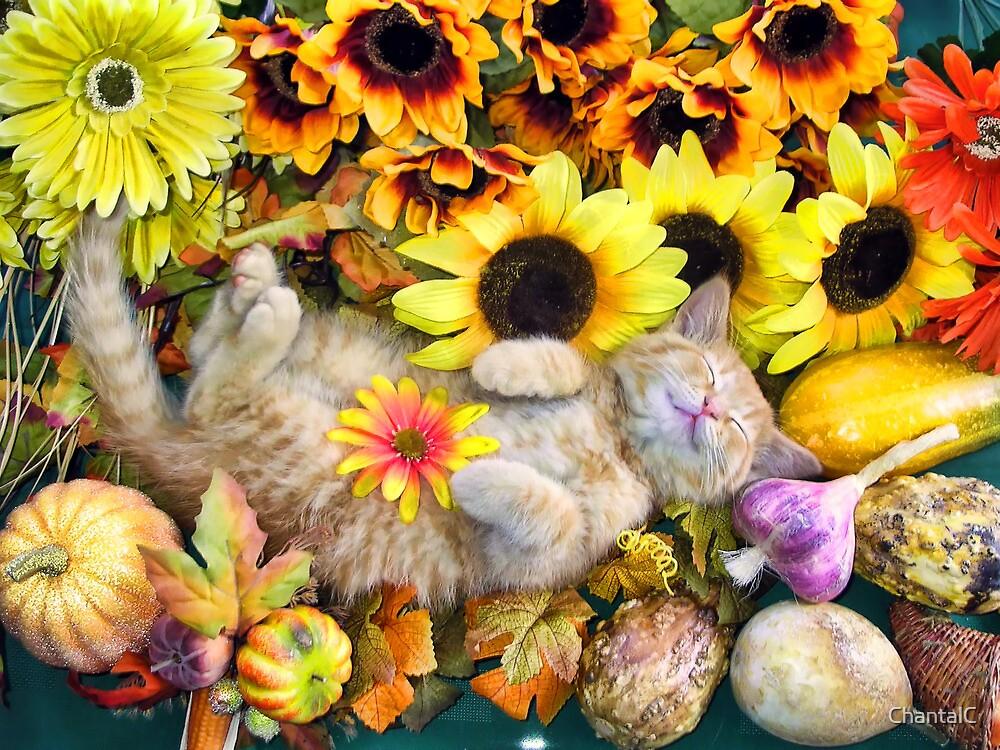 Di Milo ~ Cute Kitty Cat Kitten in Decorative Fall Colors by Chantal PhotoPix