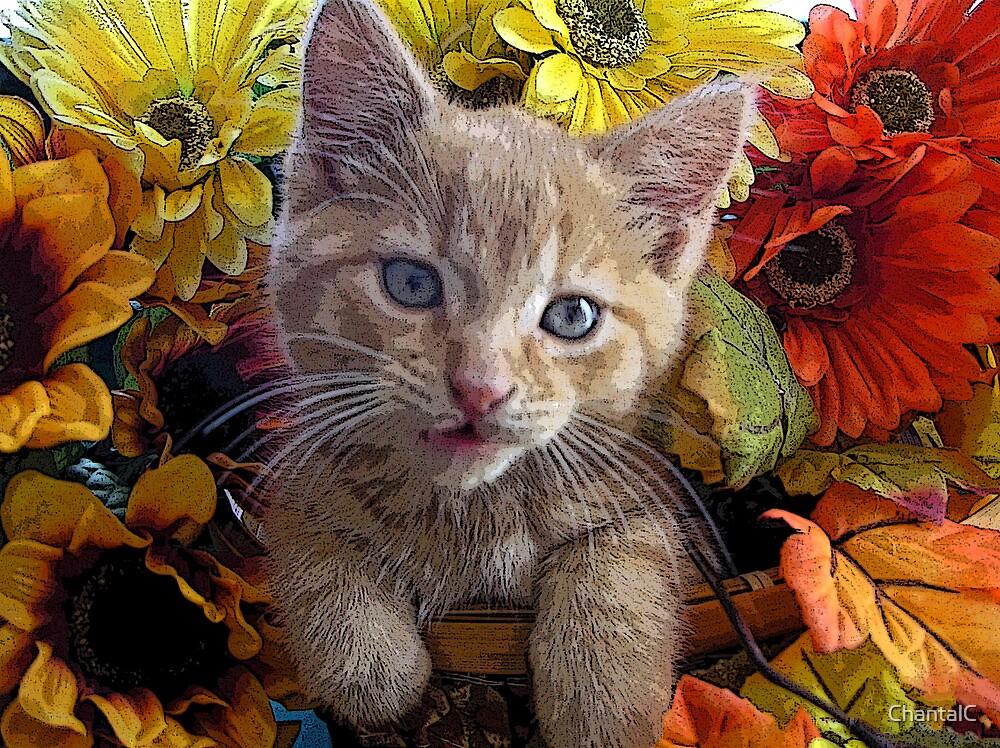 Di Milo ~ Perplexed ~ Fall Kitten by Chantal PhotoPix